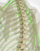 spinal_cord_injury